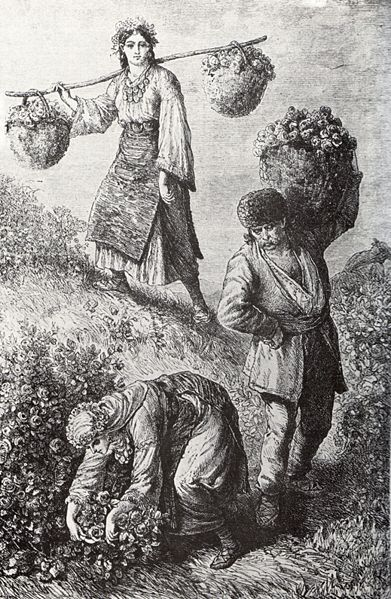 Rose-picking_in_Bulgaria_1870ies.jpg